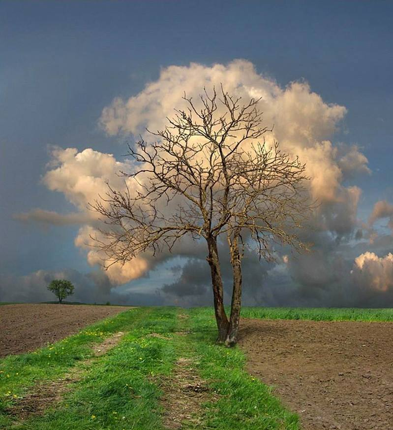 Cloud Tree... http://t.co/lmYPvrSK5Z