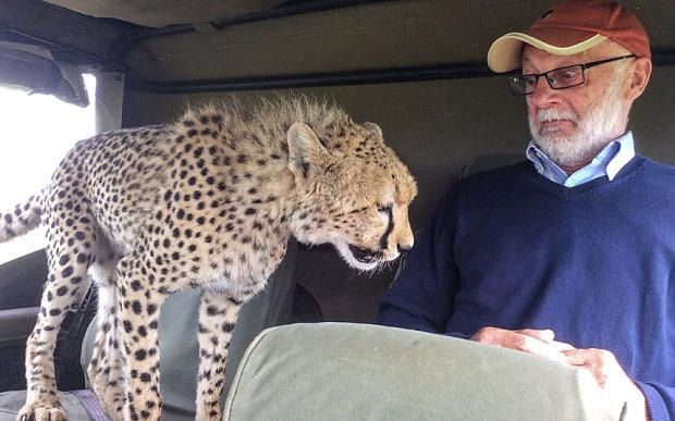 Cheetah surprises tourist by leaping into safari jeep. http://t.co/VCsG2Jzj5j #BBCinbrief http://t.co/uG717yZCa1