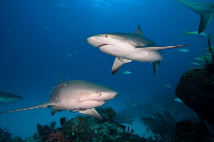 Huge! #Microsoft co-founder Paul Allen donates $4m to #shark research http://t.co/2v1CSVaWWQ http://t.co/TBvtIEjoFc