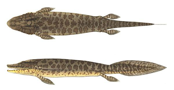 Agreement with #Nunavut means @MuseumofNature now has fossil fish #Tiktaalik. @PalaeosCool http://t.co/RbNmItvhQm http://t.co/fRypOOVX0G