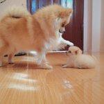 เป็นเด็กดี ห้ามดื้อนะรู้ไหม? เดี๋ยวไม่มีใครรักหนูนะ ????☺️ #สัตว์โลกน่ารัก #หมาเป็นสัตว์ปัญญาอ่อน http://t.co/mHeMdaoUaF