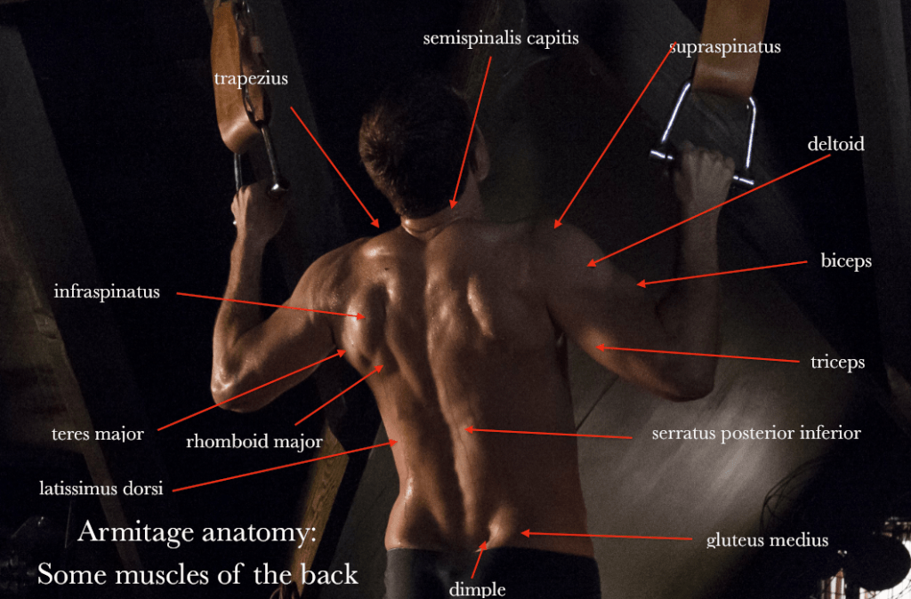 Armitage anatomy: Some muscles of the back #richardarmitage https://t.co/oidRjOtMri http://t.co/GsGYWSj9gE