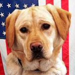 DOGDAY MONDAY: K9 Isis started with Puppies Behind Bars, & now works for ATF. Learn more. http://t.co/FOYk54cJOx http://t.co/s97w5k44Lf