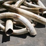 In an effort to save the African elephant, Obama proposes ban on almost all U.S. ivory sales http://t.co/ohdG9w1RDJ http://t.co/OTvgCJgsLC