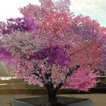 Frankenstein tree can grow 40 different kinds of fruit http://t.co/PK0jAVV7Hm http://t.co/Ph6GVGoyAe