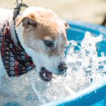 Photos: Pets in the Park http://t.co/yydKNfjXHp #SPnews #life http://t.co/iAsXXjNCUA