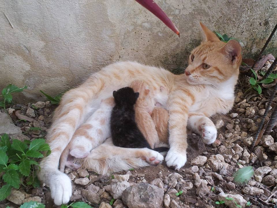 주세네갈대사관 뒤뜰에 사는 고양이의 출산소식입니다. 네 마리가 태어났다고 하네요:) 축하해 주세요! https://t.co/v0vPERg7ki http://t.co/zttOrwnu94