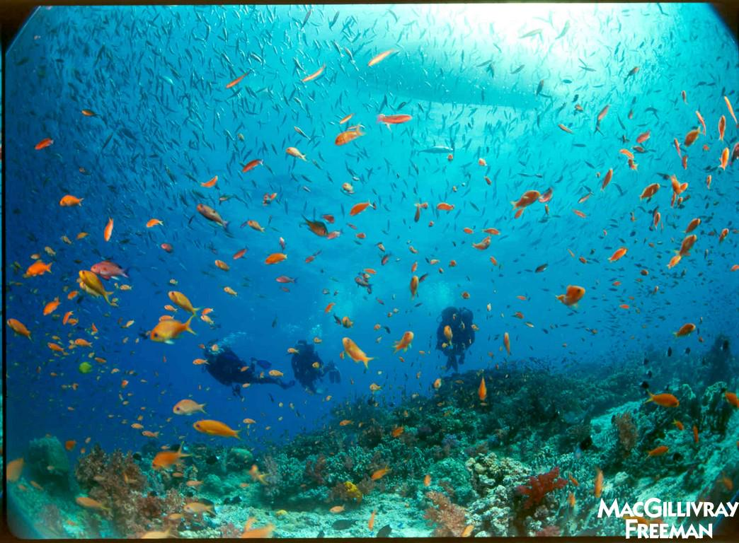 More than 80% of shallow Coral Reefs are over fished.  Raise awareness & fight to conserve our reefs! #coralreefs http://t.co/f8ViyJB8Vl