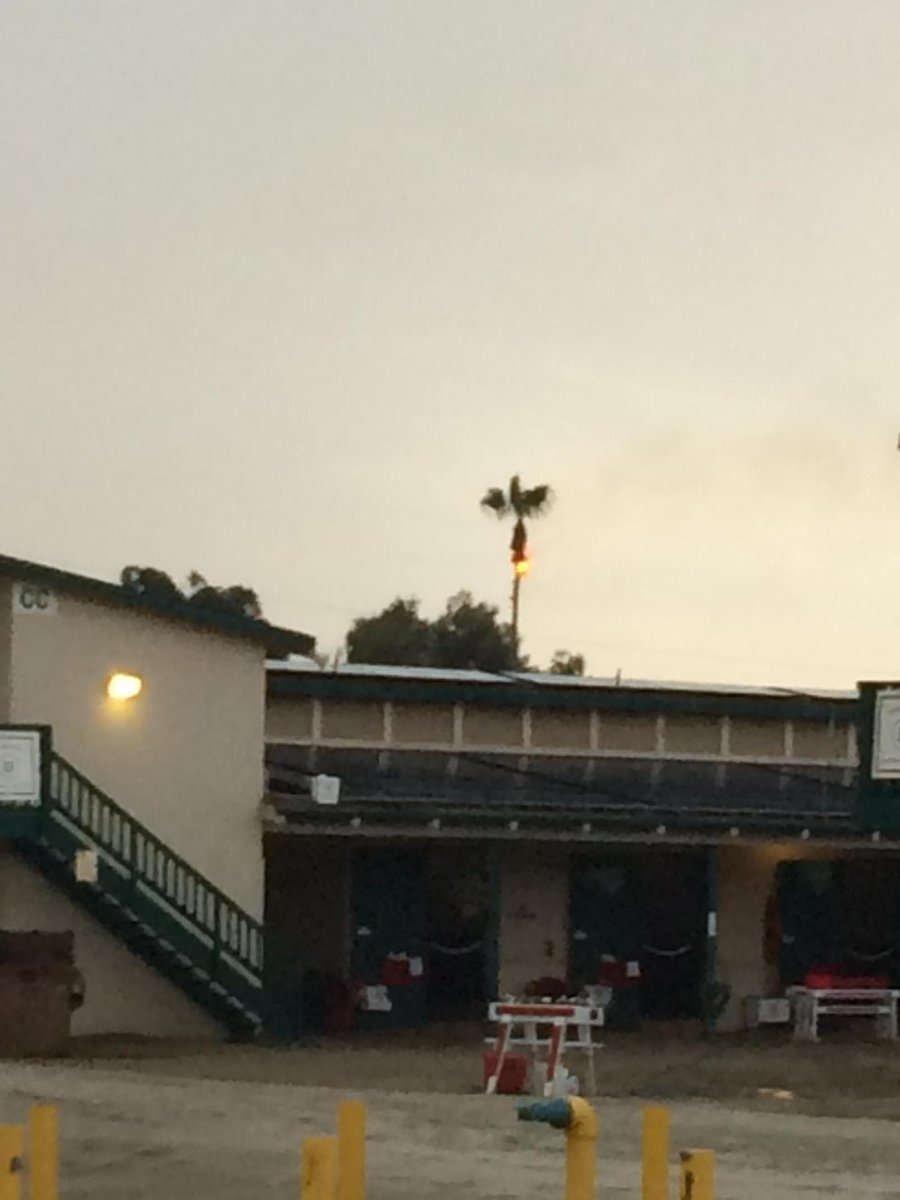 Lightning at @DelMarRacing causes a palm tree to catch fire. Track temporarily closed for training. http://t.co/BjJOIAE2aU