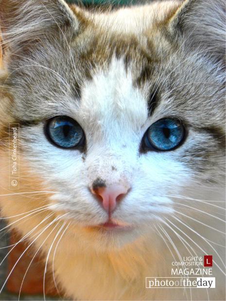 Blue Eyes, by Tisha Clinkenbeard - http://t.co/ObSD7nlG6u - #Powderly #Texas #TishaClinkenbeard http://t.co/Ai9EpZ6EK9