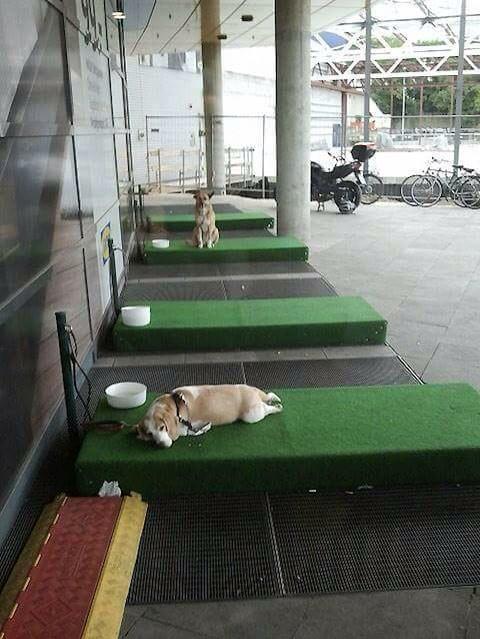 暑い車内にワンコ置き去りにしないよう、ドイツのIKEAが駐犬スペース設置。  RT @debbiedoo22 #brilliantidea