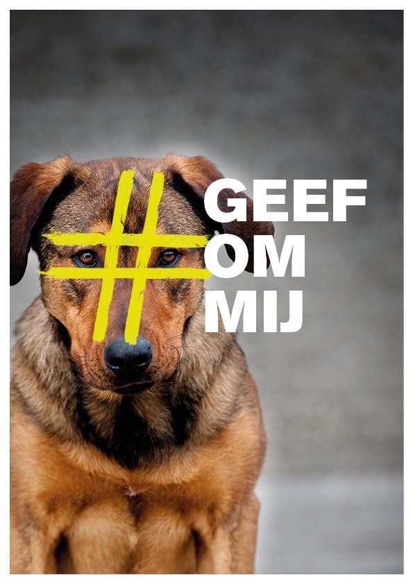 Doneer en help deze lieve hond (of 1 van de vele anderen) aan een nieuw thuis! http://t.co/MPfSkdjt6A http://t.co/BTvNWOcPvY
