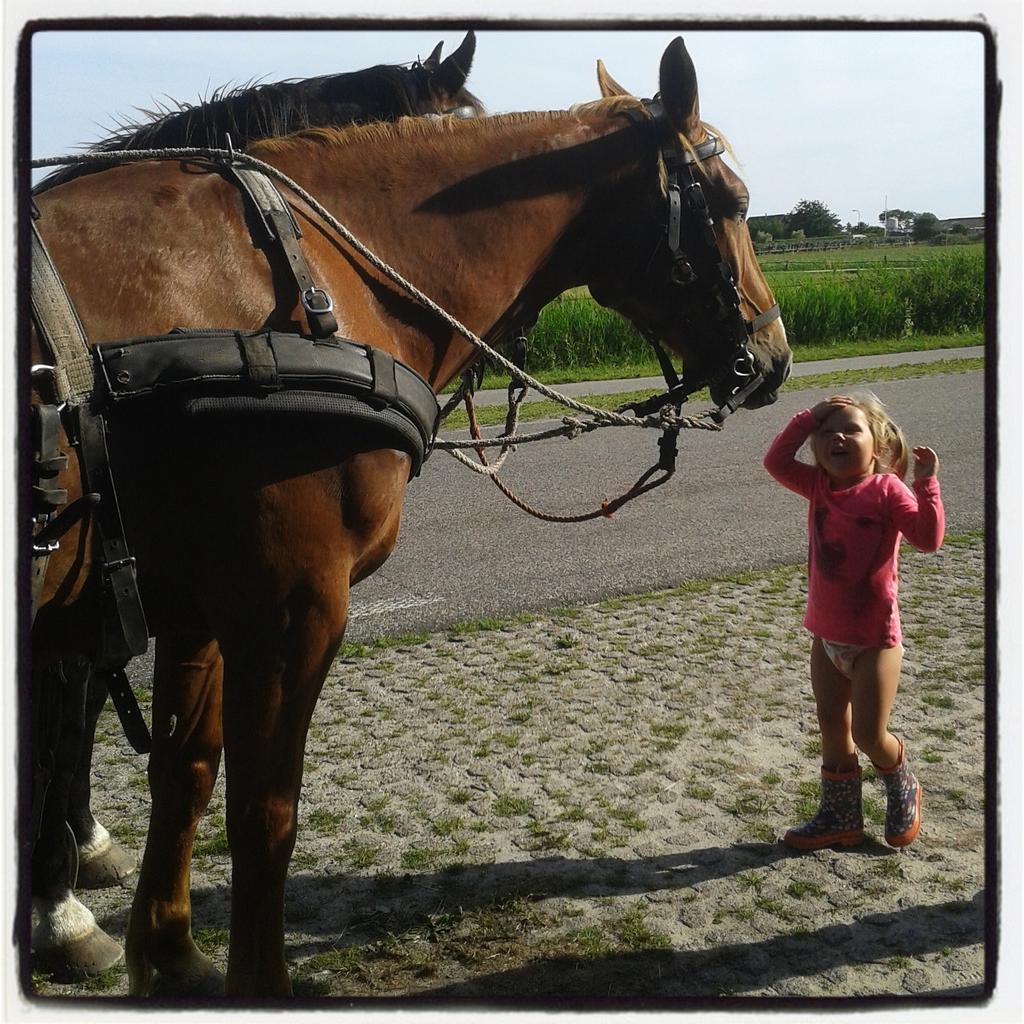 """Hoi paard! Mag ik je aaien?"" http://t.co/YYv6nELacV"