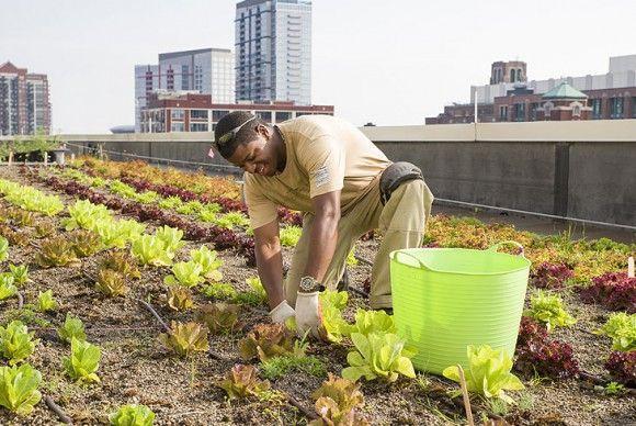 #Stadslandbouw op daken vinden wij een smakelijk idee, en u? @Groen010 @EetbaarRdam @C2CExpoLAB #duurzaamheid http://t.co/ygxL4Qq3rJ