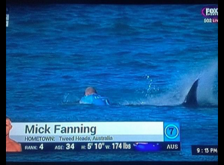 Mick Fanning Attacked By Shark During #JBayOpen [Video] http://t.co/W2Z95QpW1F | @Mick_Fanning @WSL http://t.co/E58jT6NCP1