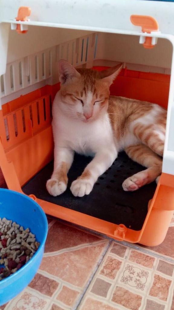 น้องแมวอยู่กับเราได้1เดือนแล้ว ไม่สามารถเลี้ยงต่อได้ ใครสนใจรับน้องไปดูแล ติดต่อมานะคะ ขอบคุณค่ะ http://t.co/a9nev7r1YC