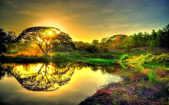 Pohon Sidratul Muntaha Pohon Yang Tumbuh Di Langit Ke Enam - AnekaNews.net