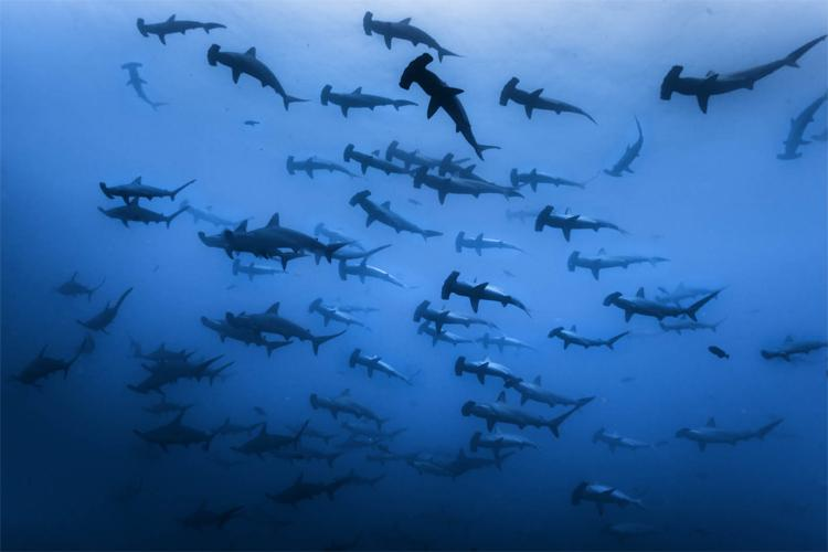 From our June issue: 7 facts about #hammerhead #sharks http://t.co/83cnIAOnbJ http://t.co/D3J3NMCDkQ