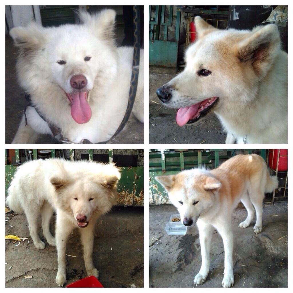 Ditemukan 2 ekor anjing sejak Selasa 21 Juli. Area: Cilandak, Jaksel. Hub Nana : 081510205752. HELP! @dokterhewanku http://t.co/TptZZqWUjw