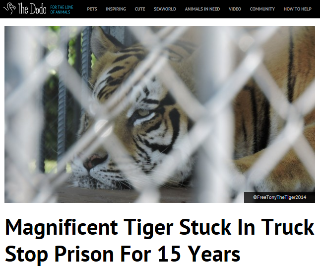 Magnificent #tiger stuck in truck stop prison for 15 years! https://t.co/3pvx2mm4eC via @dodo  PLZ RT! #FreeTonyTiger http://t.co/TlBGEX3b1p