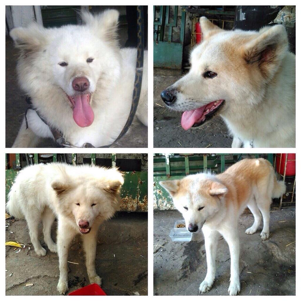 Ditemukan 2 ekor anjing Selasa 21 Juli. Area: Cilandak, Jaksel. Hub Nana : 081510205752. HELP! @ADefenders @doniiblis http://t.co/V9buXj4Ia4