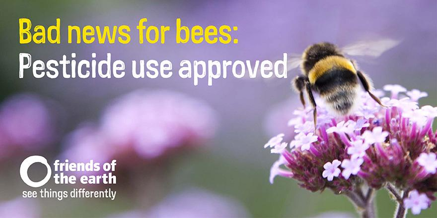 Breaking: Bee-harming pesticides approved for use in secret @DefraGovUK decision. #savebees Retweet if disgusted http://t.co/3taQGUDOn4