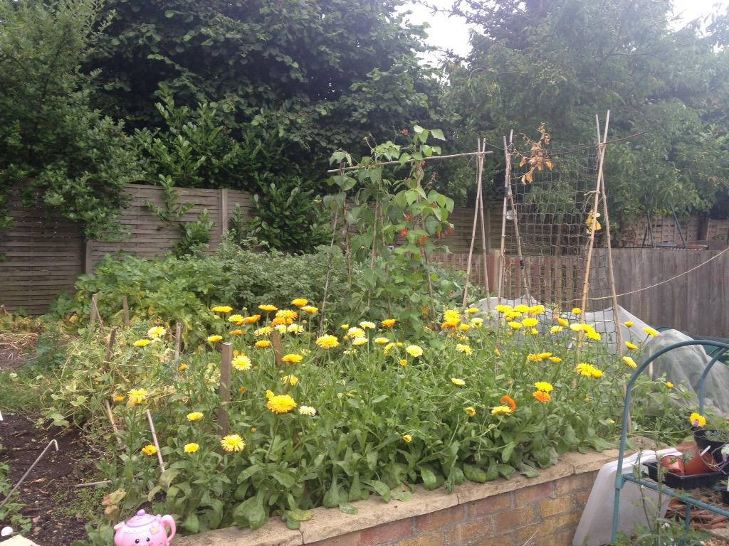 @higgledygarden I love my bee & butterfly border, but the calendula in the veg patch are a joy. http://t.co/R3D9OeQhCL
