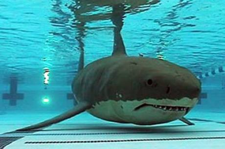 Shark in a waterpark.  YES! #Sharknado3 #TheFearIsReal http://t.co/QMPH7LKchS
