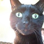 Cat has woken up. She heard cake mentioned #covhour http://t.co/yrsp8Gs3og