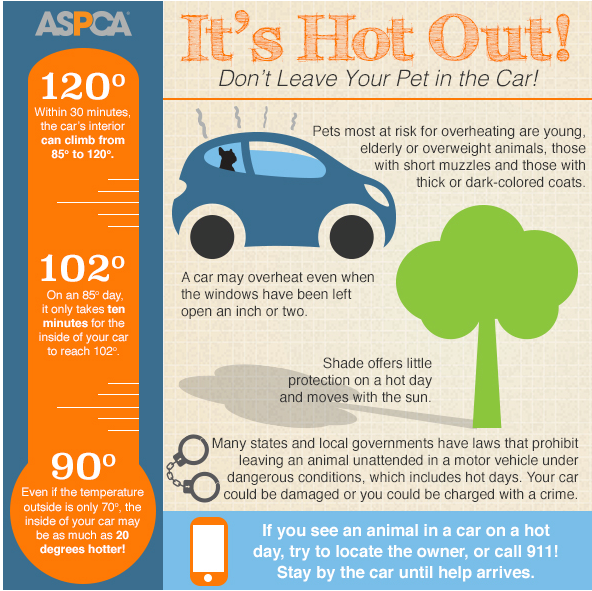 Don't leave your pet in the car! http://t.co/8qZBNYKivH