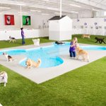 RT @timesofindia: JFK Airport to open world's first pet terminal http://t.co/ChG7OXGmLd