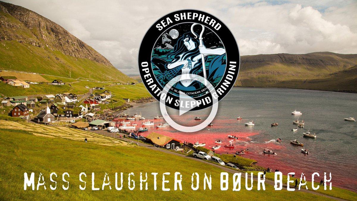 RT @seashepherd: #VIDEO Of Mass Slaughter of Pilot Whales in #FaroeIsland http://t.co/cndfoZsrBS #SeaShepherd #OpGrindini #Graphic http://t…