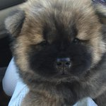 Ghenghis khans new eight week old daughter needs a name   Any ideas?? She was one of four   Got her today http://t.co/35LAgh4GHh