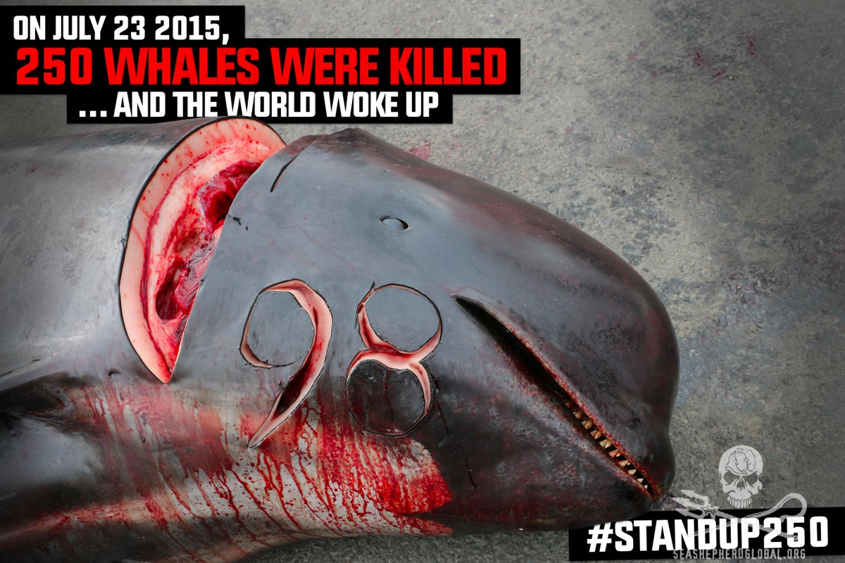 """""""Suyay is waiting 4 the world 2 stand up against this violent, bloody slaughter.""""#StandUp250 #SeaShepherd #OpGrindini http://t.co/2WMwfBBX20"""