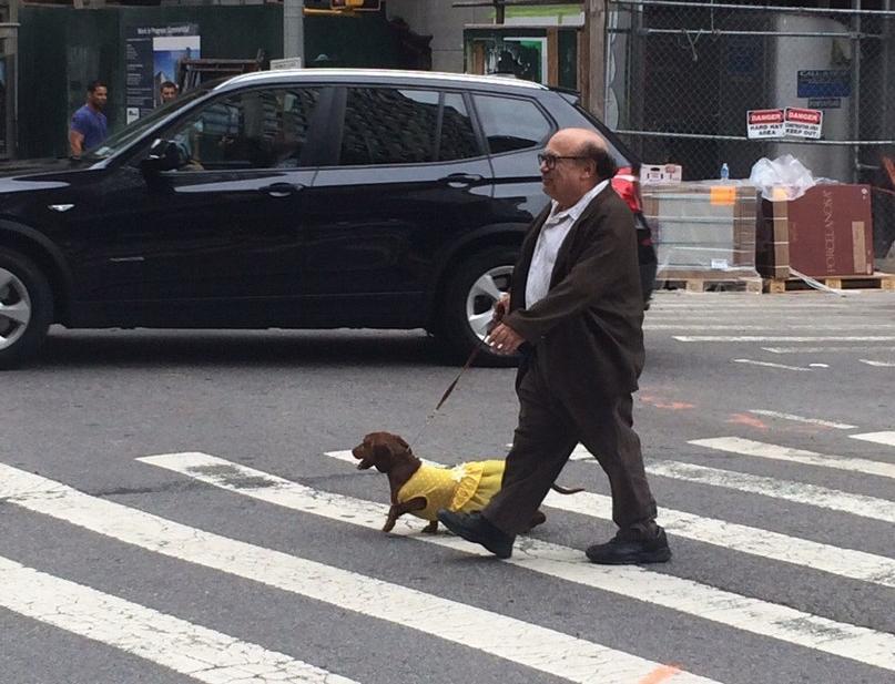 Ничего особенного, всего лишь Дэнни ДеВито и его четвероногий друг в платье прогуливаются по Нью-Йорку ;) http://t.co/MUcGKAlLJz