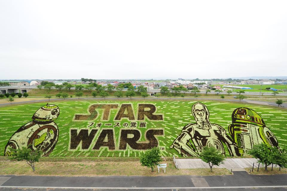 Впечатляющие рисунки на рисовых полях в Японии, посвященные «Звездным войнам» http://t.co/E2yEnrTWqD