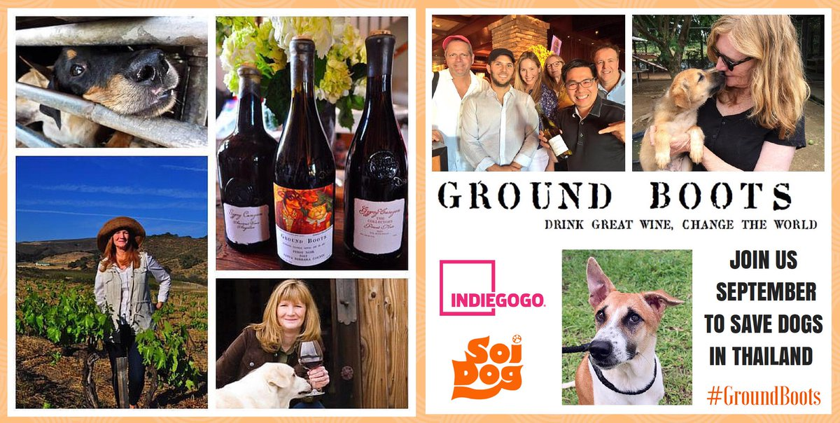Excited for #Indiegogo campaign in Sept. to save #dogs in Asia. Join #GroundBoots: http://t.co/zdMC7NVJRS #animals http://t.co/CWyHlTeigJ