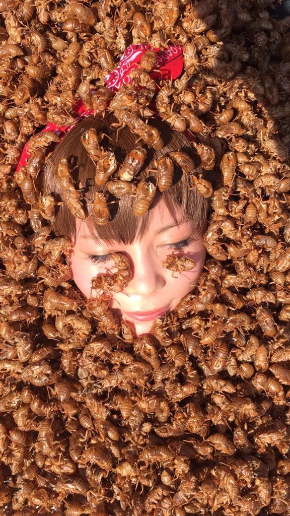 【画像】中川翔子さん、毎年恒例のセミの抜け殻芸を披露 クッソきもい
