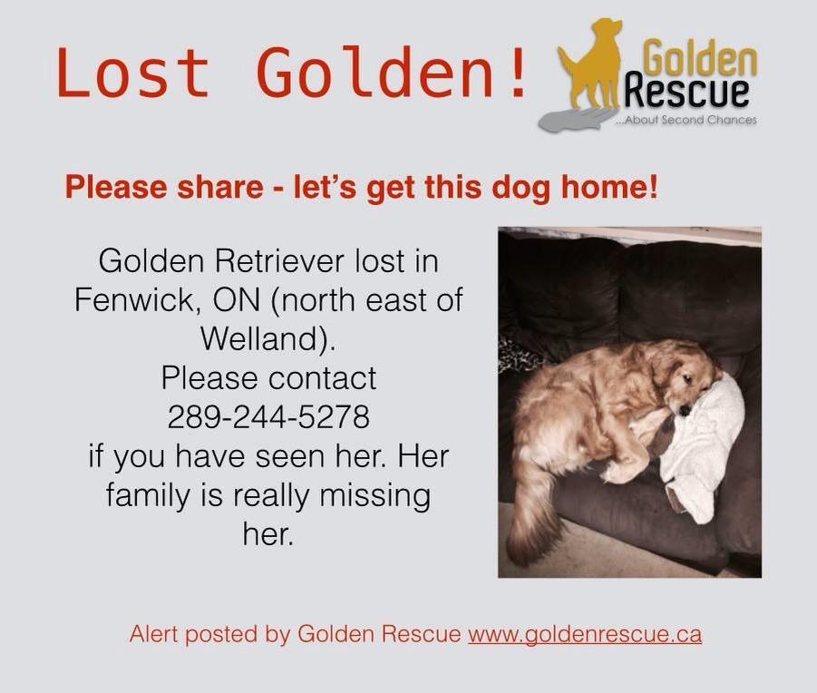 Please RT! #Lostdog #Goldenretriever missing in #Fenwick #Ontario! #welland #lostpets #doglove #doglover #dog http://t.co/IlcrBrWnmY