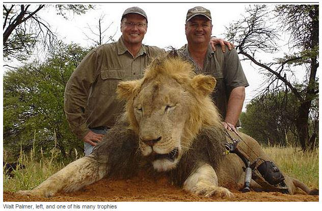 Dr. Walt Palmer killed #CecilTheLion. Call 952-884-5361 if u want to let him know how u feel: http://t.co/MXd1wDj5O8 http://t.co/fkdbmPvg5n