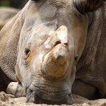 Muere hembra de rinoceronte blanco del norte: sólo quedan cuatro en el mundo http://t.co/N9is35ziv4 http://t.co/GQbmNDS9xi