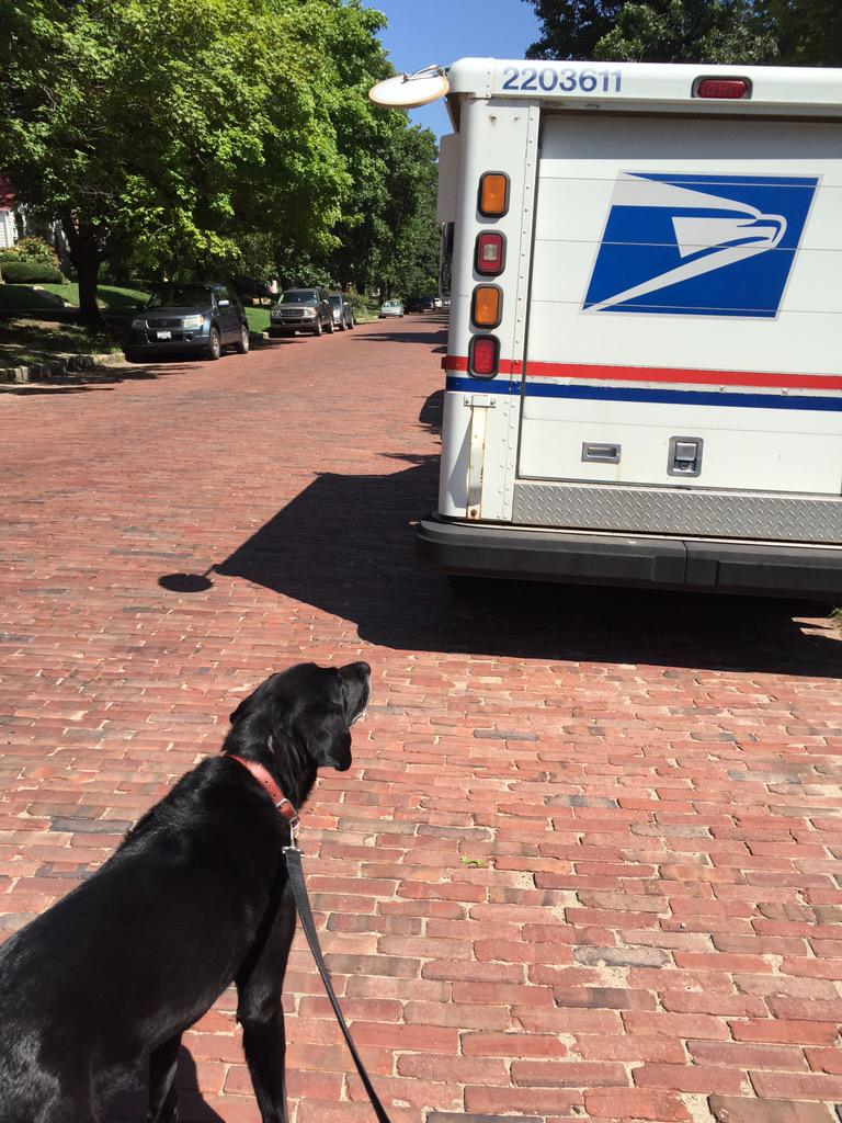 The mailman started carrying treats and now our dog is basically his stalker http://t.co/2ztnaGrjz6