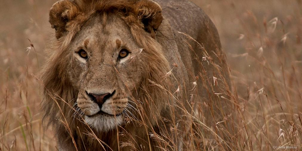 Animals are not trophies! Justice for #CecilTheLion! http://t.co/3vu9GitgHJ http://t.co/lSWvApVYY5