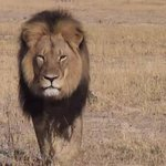 The tourist who killed #CecilTheLion has been named http://t.co/HMFi8qurj5 http://t.co/2dlUt7G0Nd