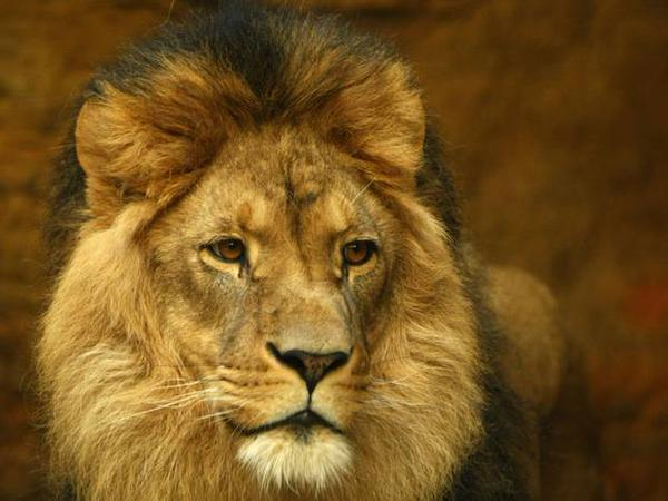 """""""@rickygervais: RIP #CecilTheLion  I'm struggling to imagine anything more beautiful than this http://t.co/eZgWJiDl5a"""""""