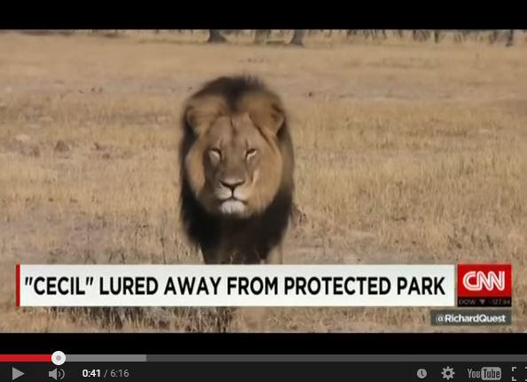 Tragedy of #CeciltheLion: Leader of #pride, victim of #trophyhunt @rickygervais @DebraMessing http://t.co/nrJ2kvtZ1x http://t.co/OkOvRXKFbj