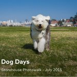 "Latest photowalk with the @storehousehq crew. ""Dog Days"" #dog #summer #sanfrancisco #leicaq https://t.co/a95XWM16mT http://t.co/Gupps1JBhU"