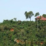 #Turismo Urge reconstruir ruta del café en #Chiapas http://t.co/BrtBxXoAF6 http://t.co/YrqO2V0KR9