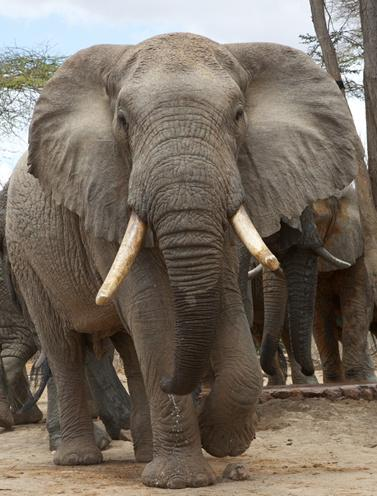 #TrophyHunting is disgusting . We must stand up + shame those who do it . To protect the beauty in our world @DSWT http://t.co/7pK2WExORq