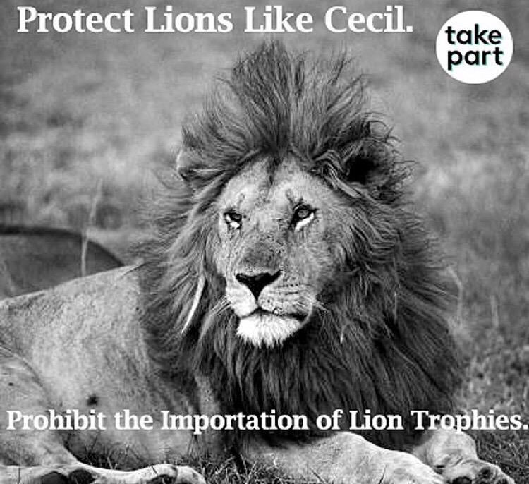 Protect lions like #Cecil. Join @endangered to stop transport of lion trophies https://t.co/3WF86OfHc2 #CecilTheLion http://t.co/hEpG48bUeI